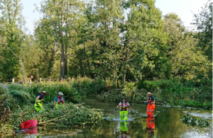 Joint restoration project on River Avon helps improve habitat diversity