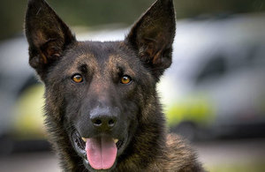 Explosive detection dogs introduced in British airports to screen cargo