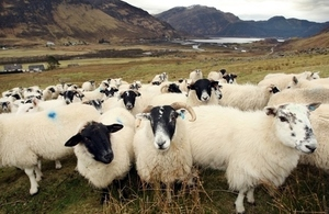 UK Government extends guarantee for Scottish farmers and crofters