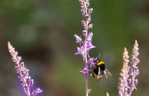 Further restrictions on neonicotinoids agreed