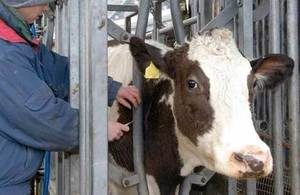 APHA offers private blood testing to help diagnose TB in cattle