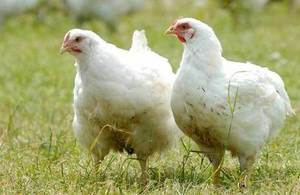 New measures to protect against Avian Flu