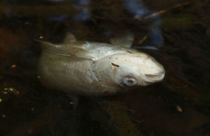 South West Water fail to report dead fish after polluting Devon stream