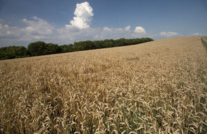 Multi million pound boost for crop resilience