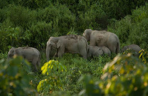 World Elephant Day: UK gives a helping hand to iconic mammals