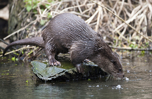 New otter class licence issued