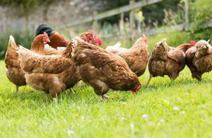 Poultry keepers urged to take action now to prepare for winter Avian Flu threat