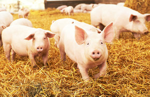 Porcine epidemic diarrhoea (PED) becomes notifiable disease in England