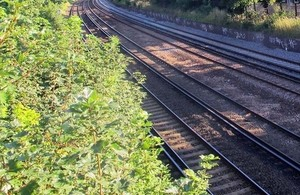 Network Rail vegetation management: Chair appointment and terms of reference